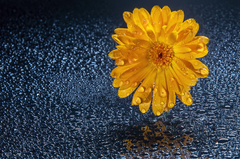 kvet...19