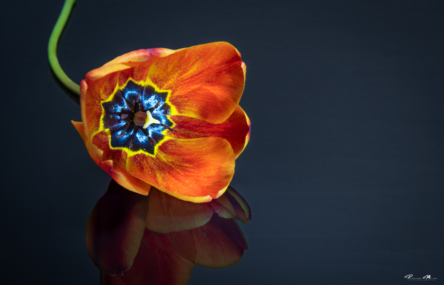 Kvet..14