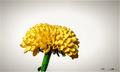 Kvet...06