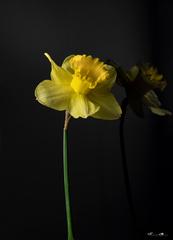 Kvet..12