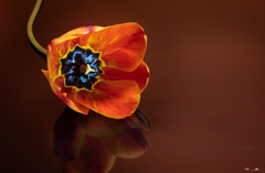 Kvet...15
