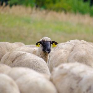 Čierna ovca v rodine....