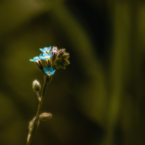 Kvet...12