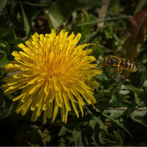 Kvet...05