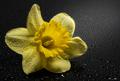 Kvet...09...