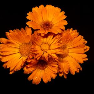 Kvet...18