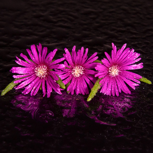 Kvet..17