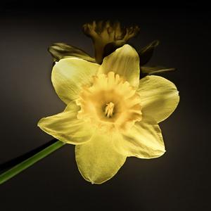 Kvet...11