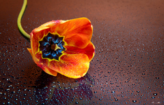 Kvet...16