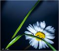 kvet-02