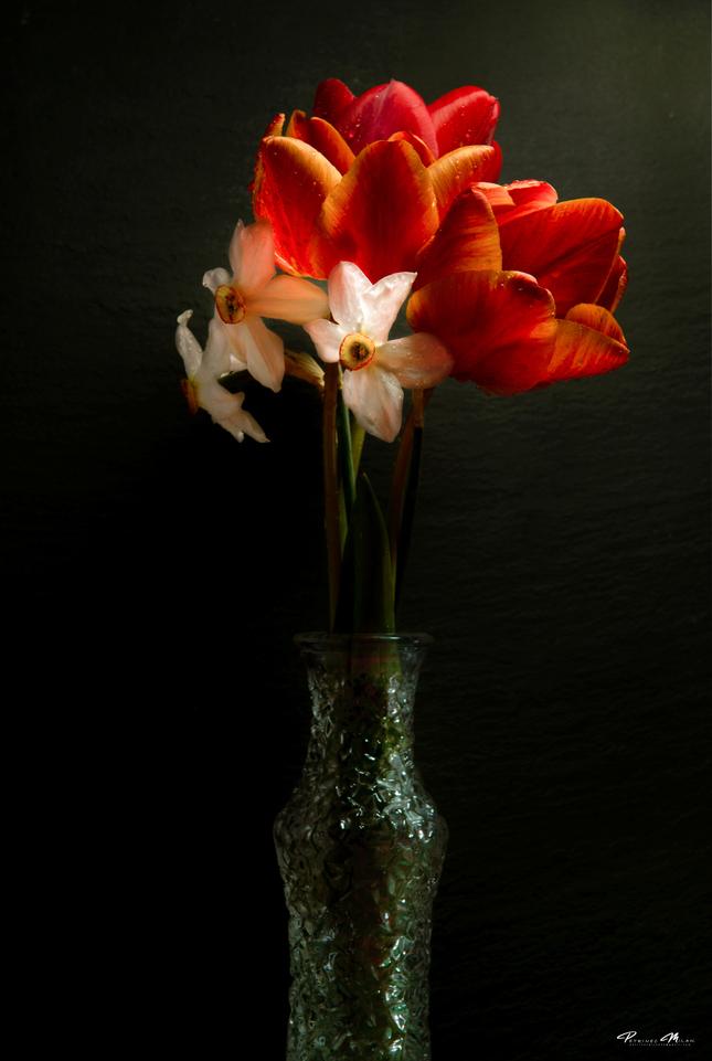 Pán Tulipán...17