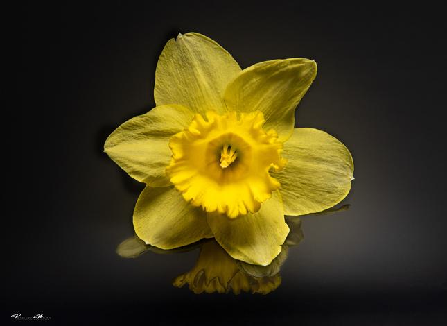Kvet...10