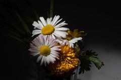 Kvet..16