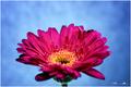 Kvet...04
