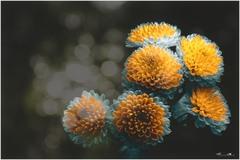 kvet07