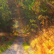Jesenna cestička