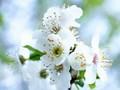 óda na jar