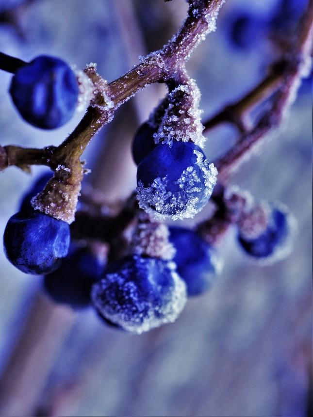 v mrazivom dychu zimy