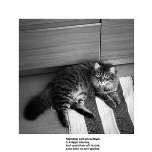 Naše mačky 2/3