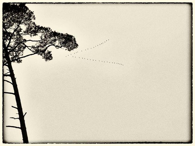 husičky