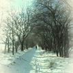 zimná Čerešňová