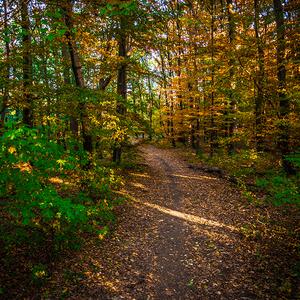 Lesnou jesennou cestou po Zobori
