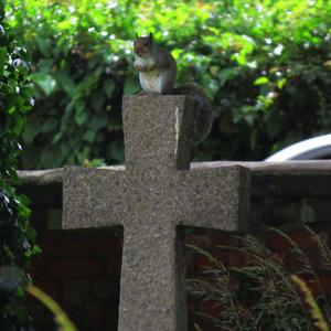 Modliaca veverička