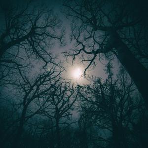 V lese počas noci