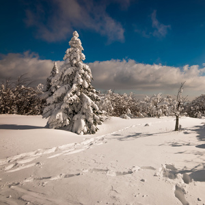 Cez zmrznutú krajinku