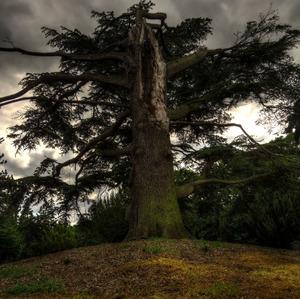 Creepy tree