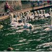 Labute v prístave