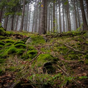 Upršaný les...