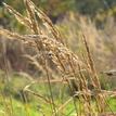 jesenná tráva