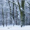 zimny les