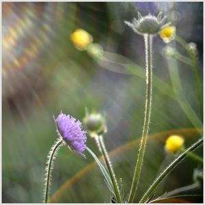balada o kvetoch