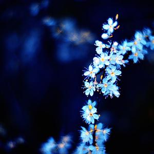 hlboká modrá