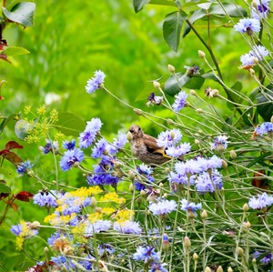 maskovaný v záhrade 2