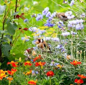 maskovaný v záhrade