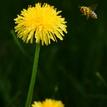 včelička v práci