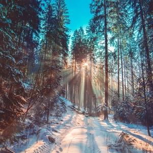 Keď sa slnko prediera lesom