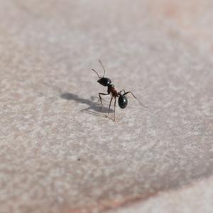mravenečci jak se pilne prochádz