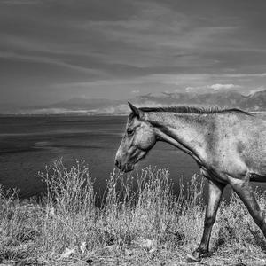 pri Shkoderskom jazere(Albánsko)