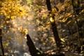Jesenné trblietanie
