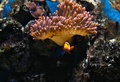 Našiel sa Nemo :)
