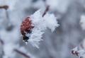 v objatí zimy