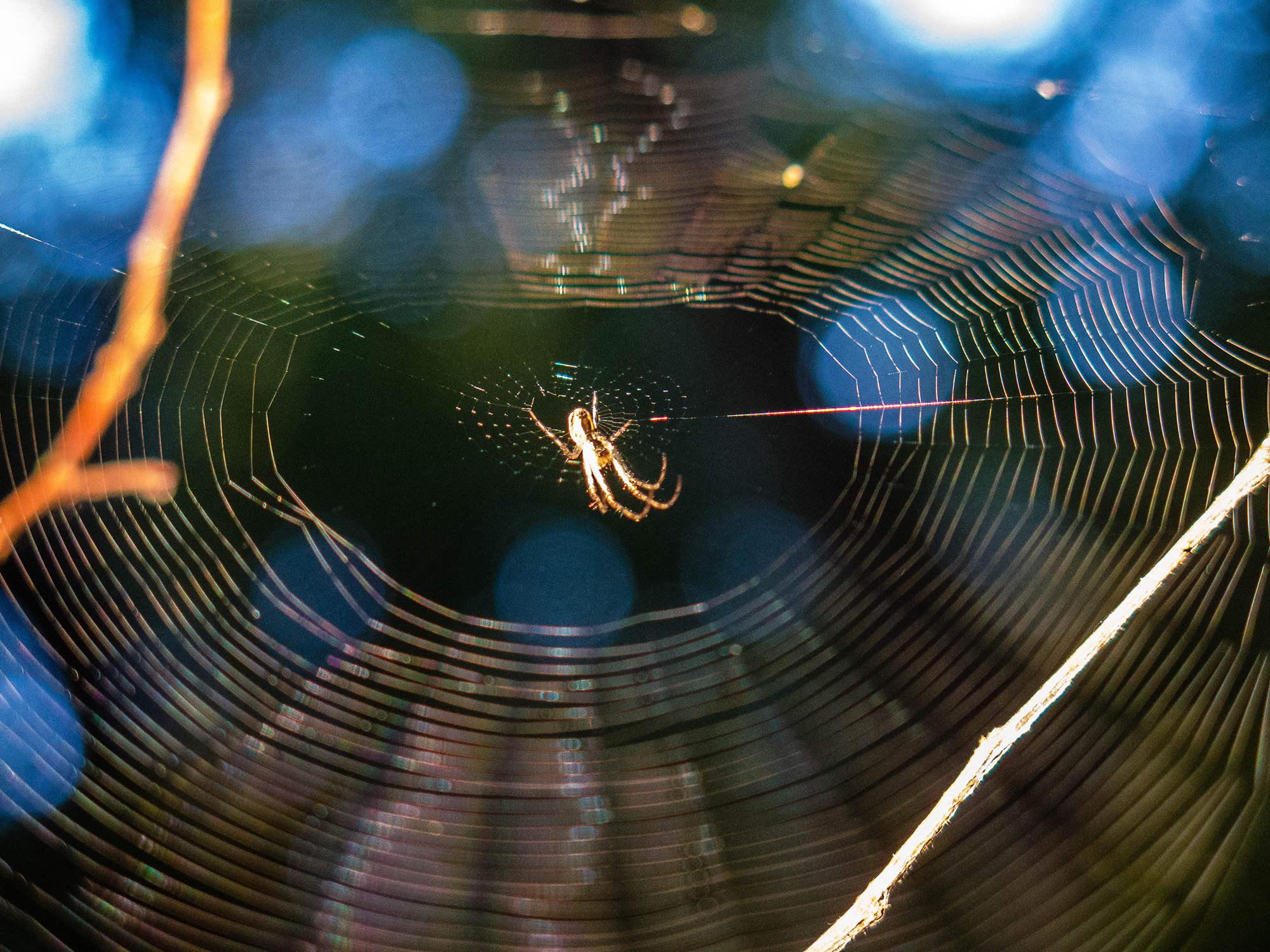 1 pavučinová