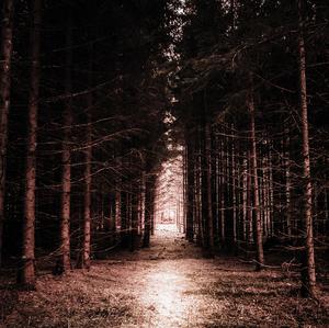Svetlo v temnote