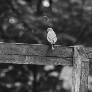 Zadumaný vtáčik