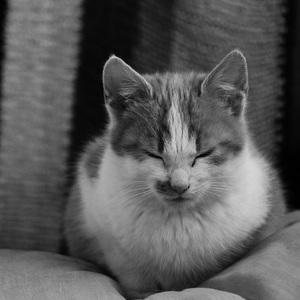 Mačacia pohodička