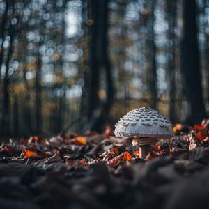 jesenné svetielko